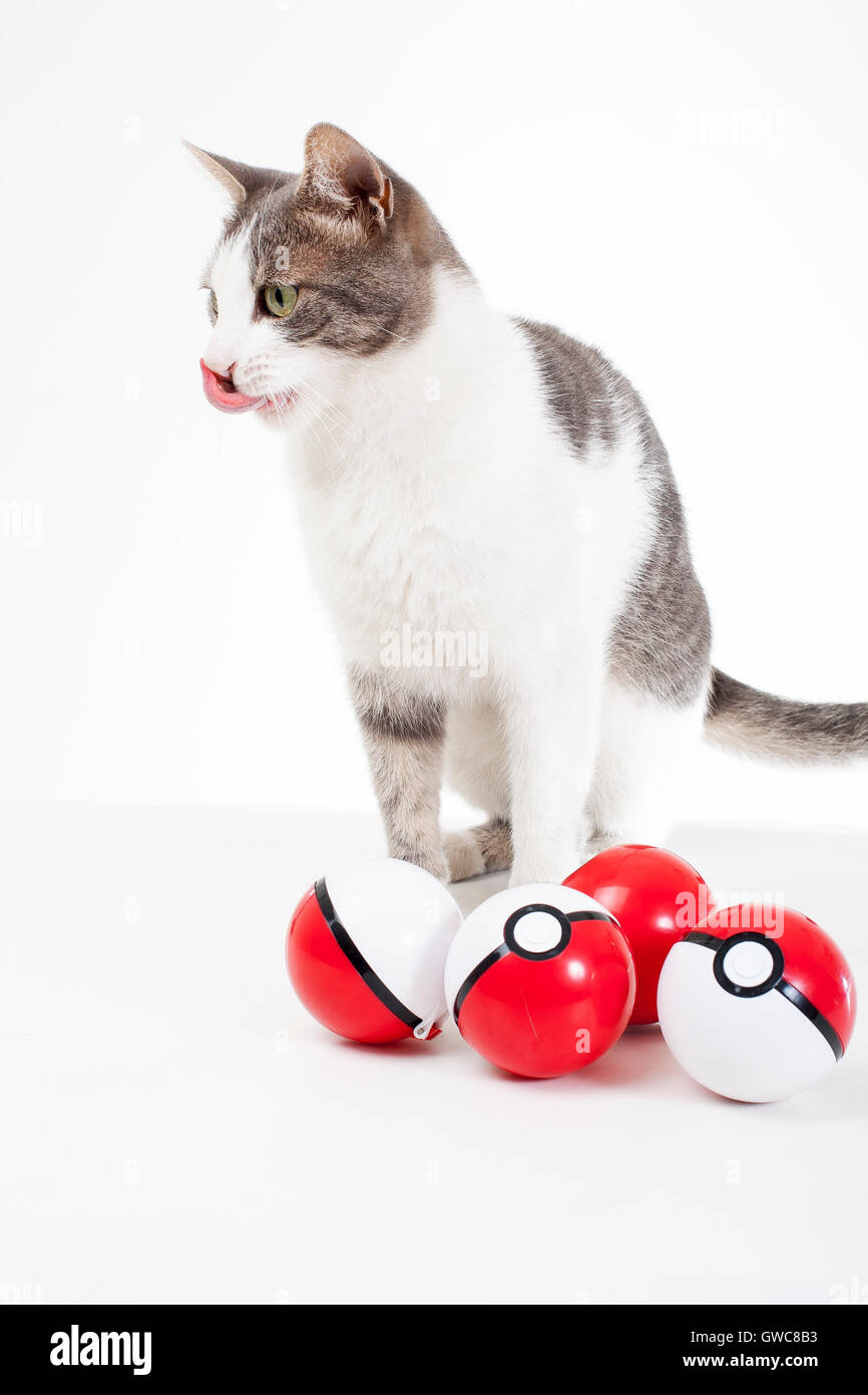 Trained pets studio white background photography Cat with real pokeballs play fun cute.Pokemon go real animals Funny - Stock Image