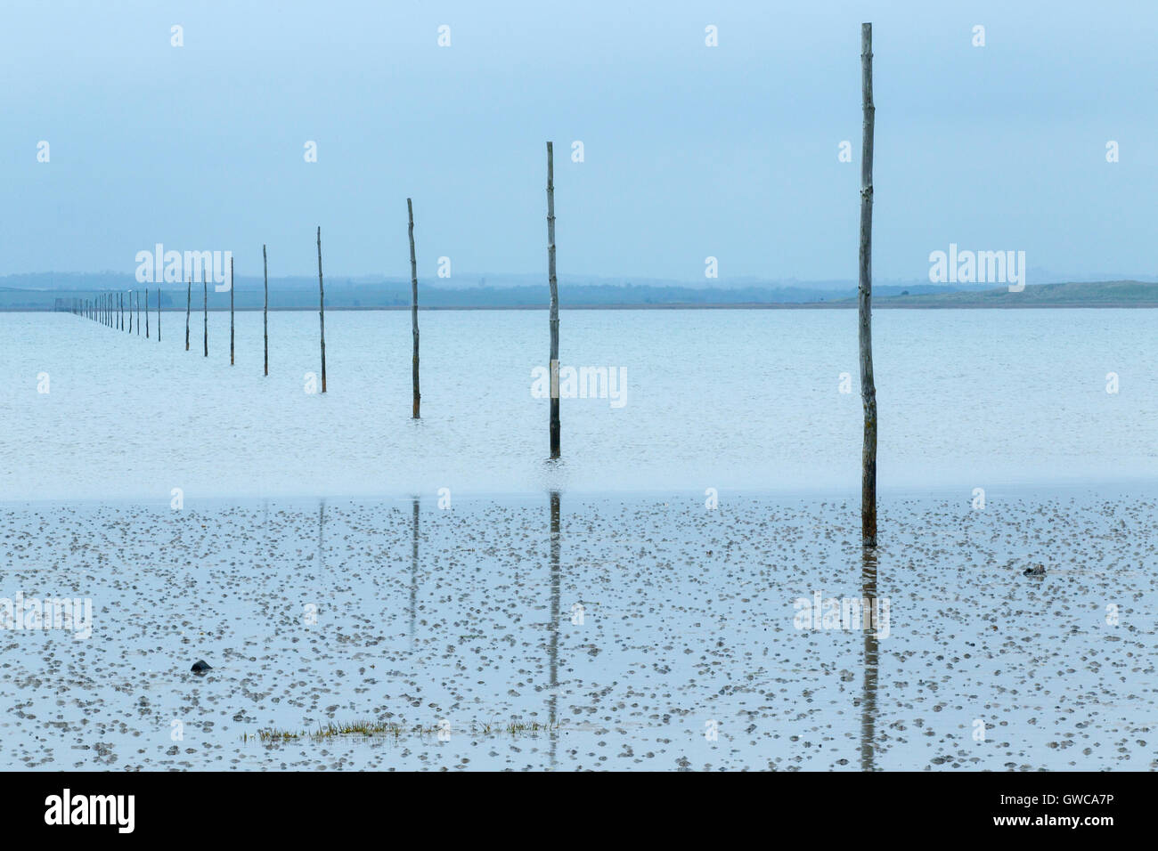 view of Holy Island, Lindisfarne at high tide showing pilgrim guide poles - Stock Image