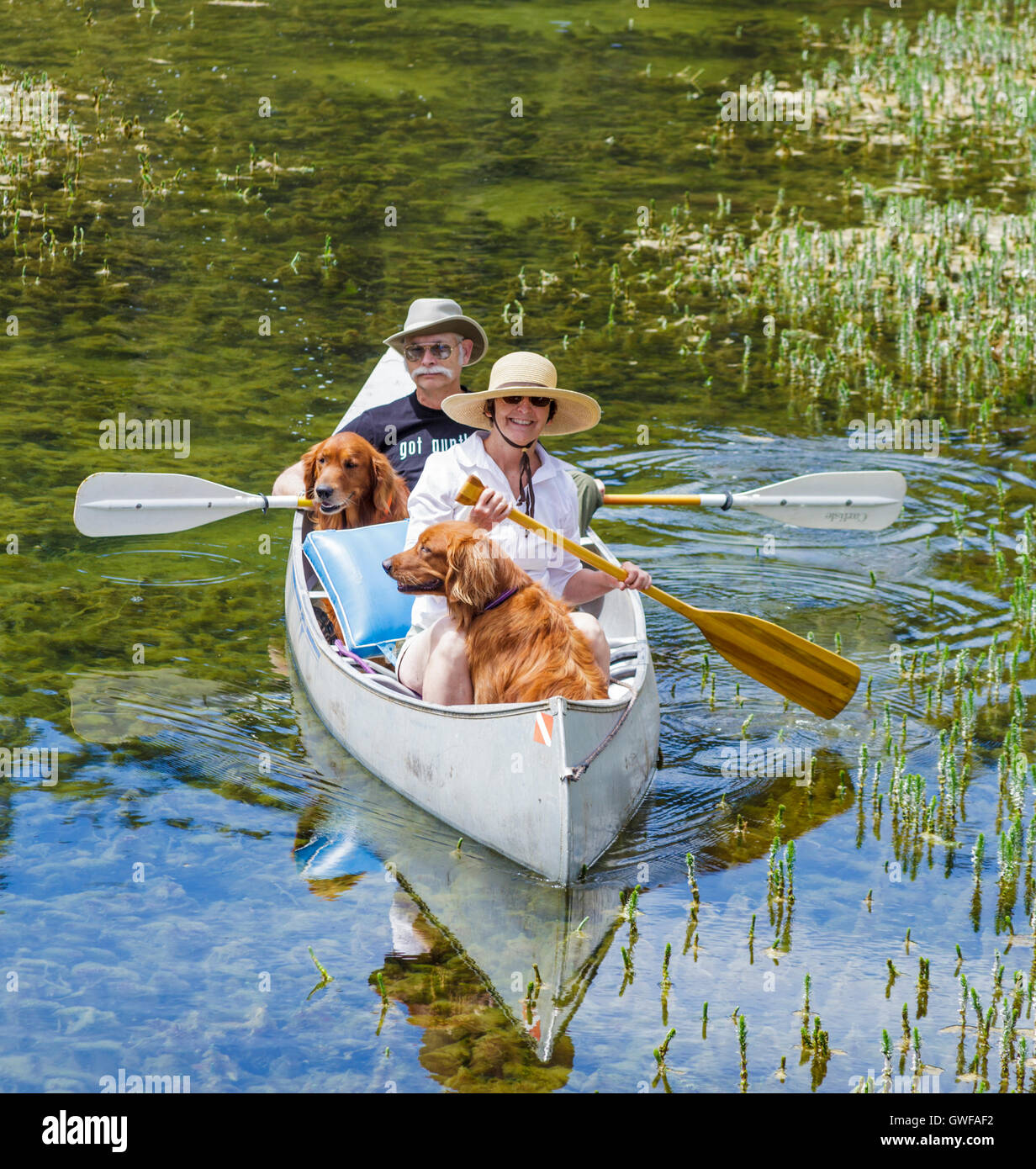 Couple share canoe with retrievers in Twin Lakes in the Mammoth Lakes Basin - Stock Image