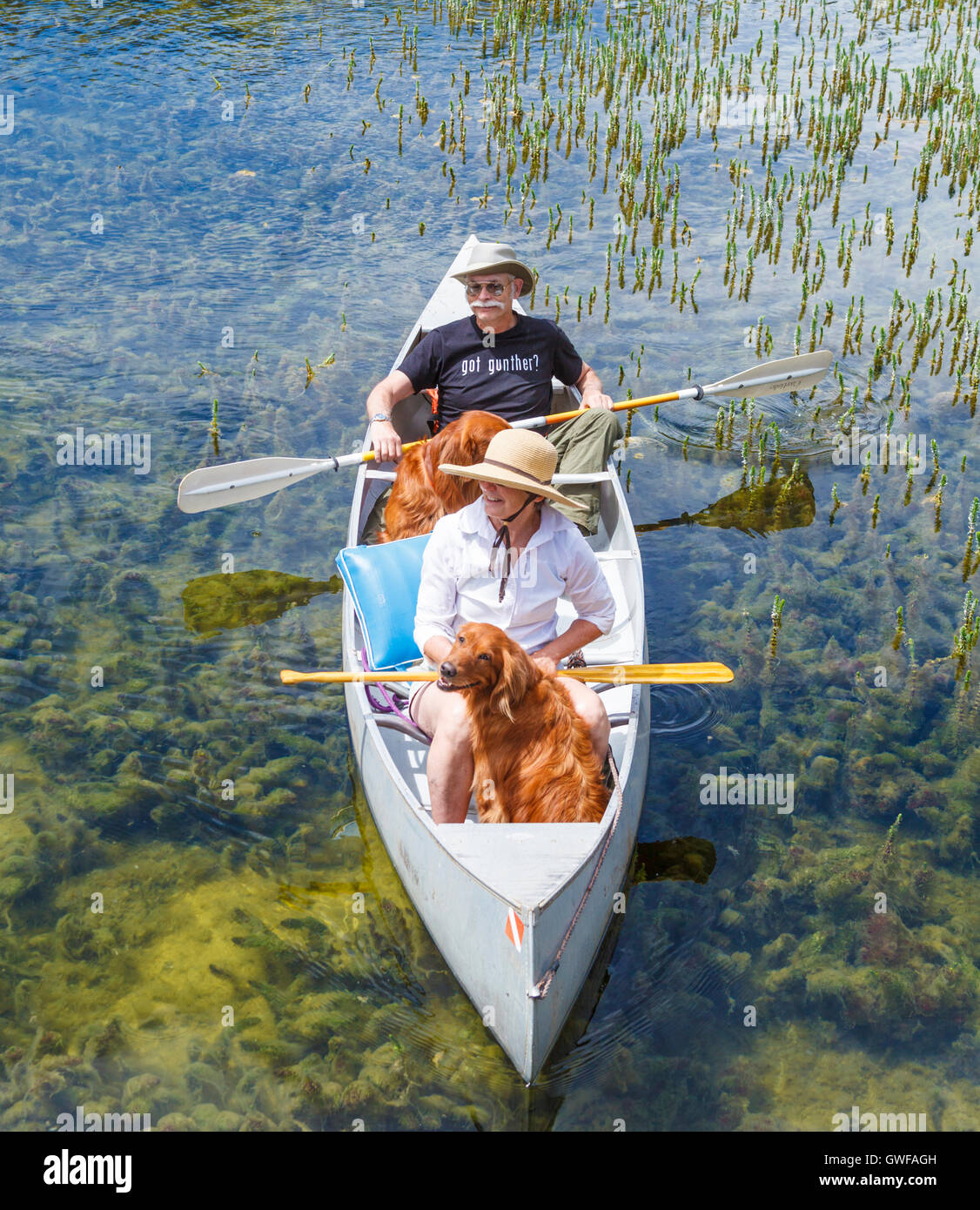 Couple and retrievers in canoe in Twin Lakes in the Mammoth Lakes Basin - Stock Image