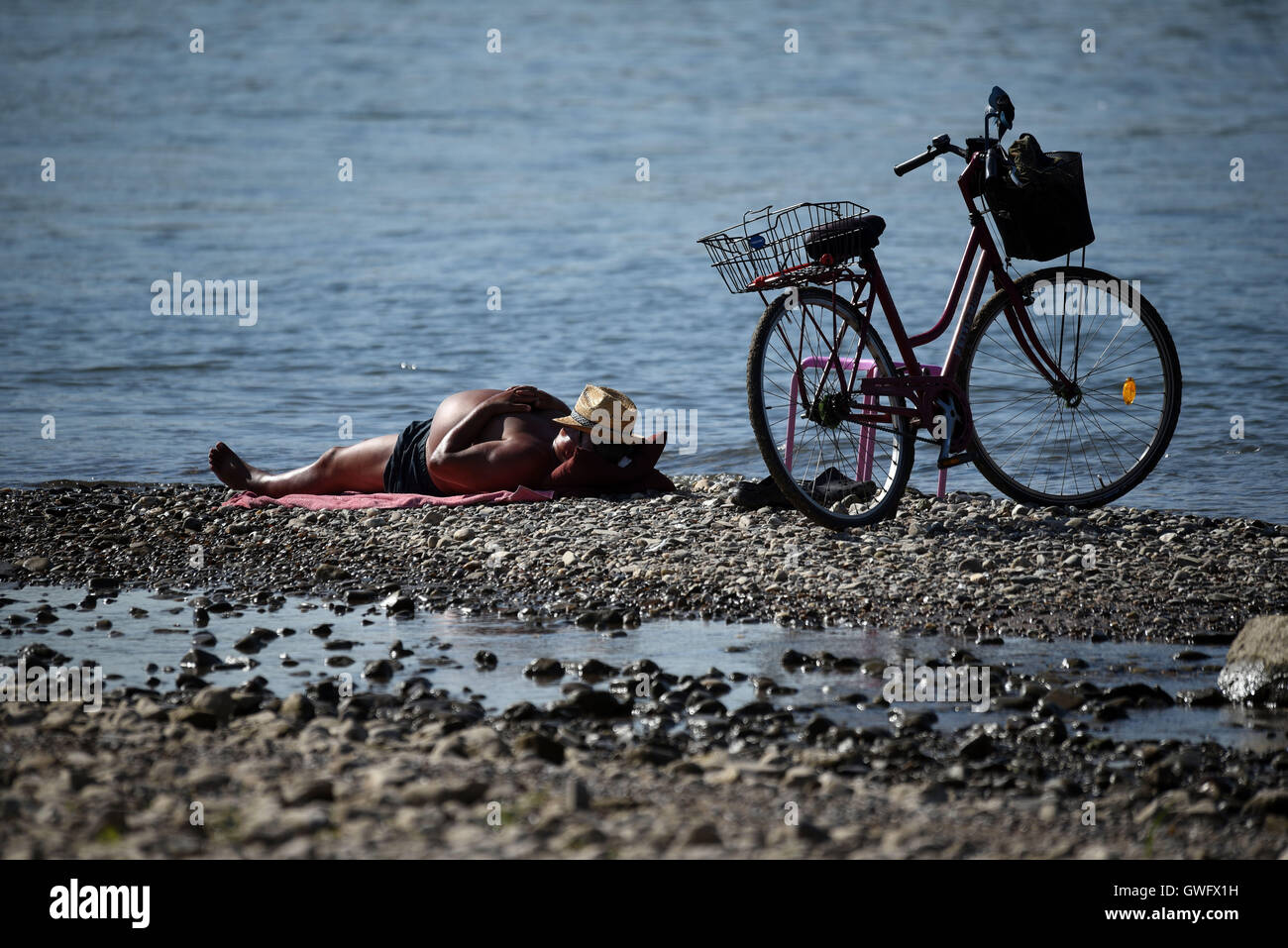 A man sunbathing on a small island by the riverbank of the Rhine, Cologne, Germany, 13 September 2016. The continuing - Stock Image
