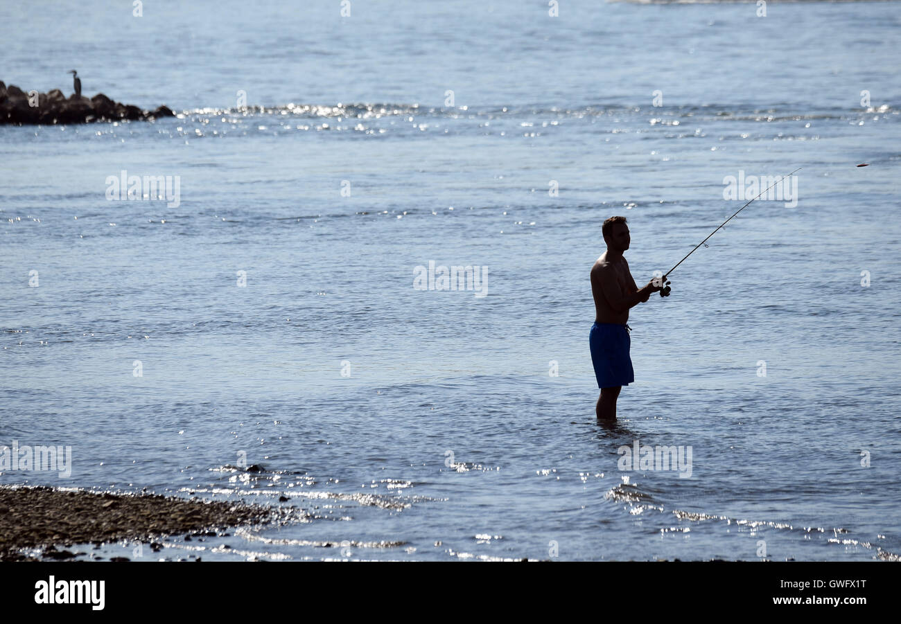 A man fishing on the riverbank of the Rhine, Cologne, Germany, 13 September 2016. The continuing heat wave and added - Stock Image