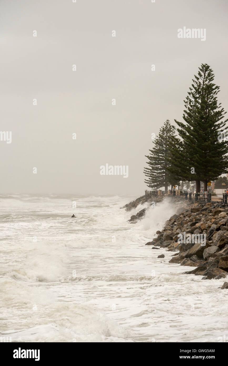 Brighton, Adelaide, South Australia. 14th September, 2016. A surfer risks his life near rocks as turbulent seas - Stock Image