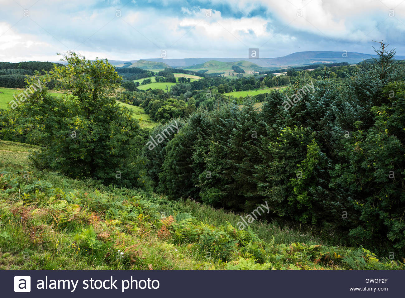 Looking south towards the Carter Bar on the Anglo Scot Border from Edgerston. - Stock Image