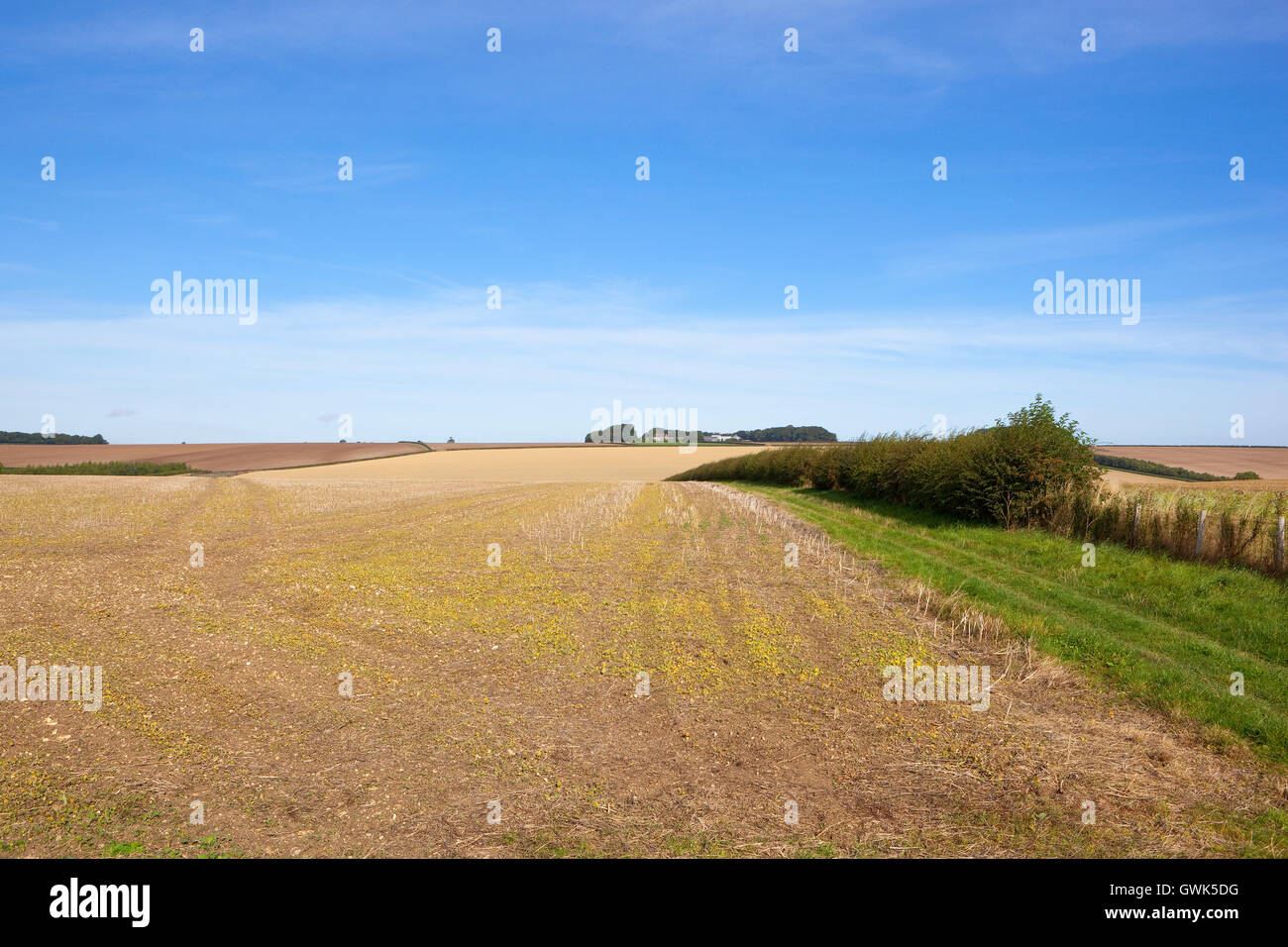 Blue sky over cultivated fields and hedgerows of the Yorkshire wolds above Horsedale in September. - Stock Image