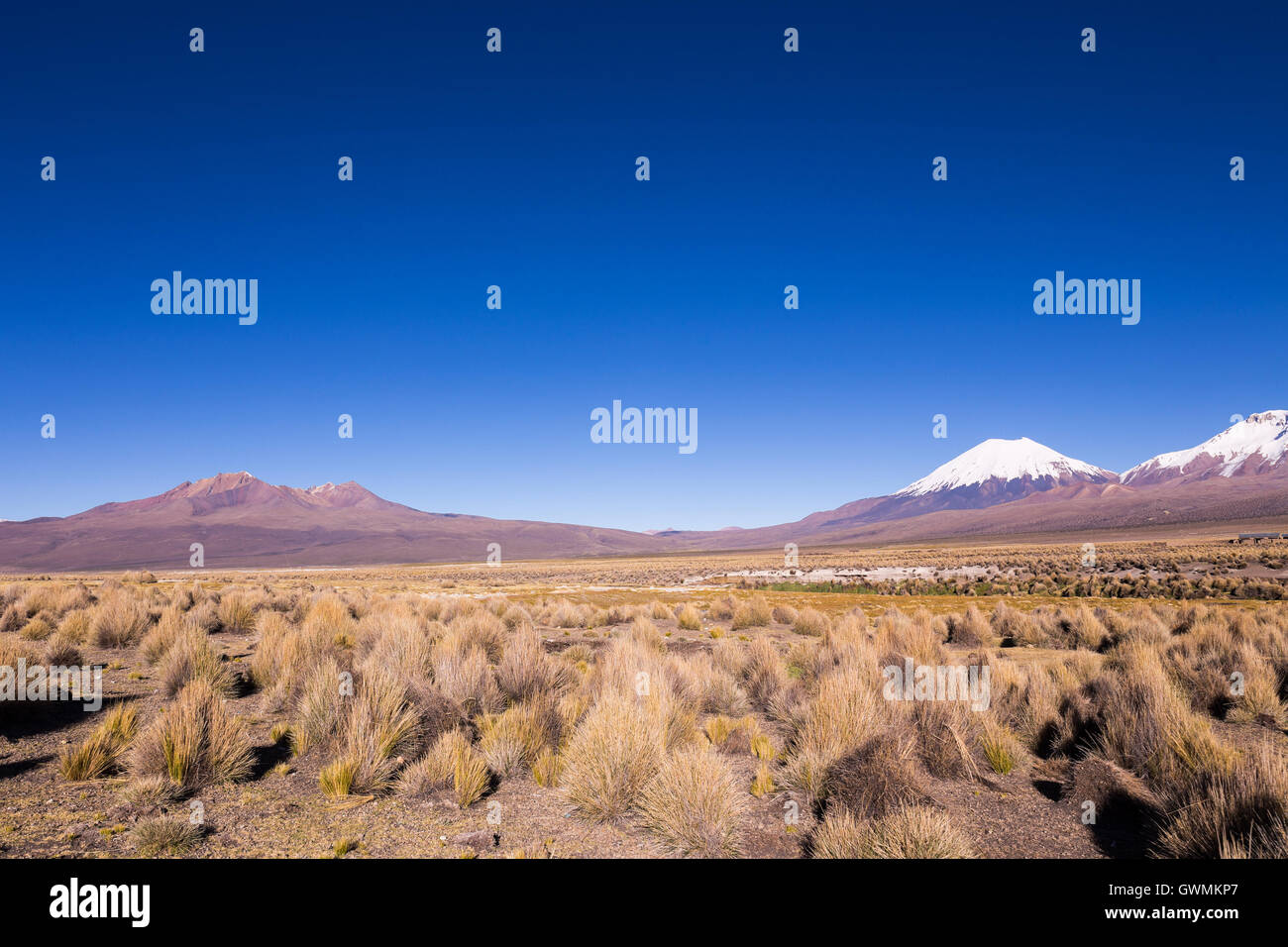 High Andean tundra landscape in the mountains of the Andes. The weather Andean Highlands Puna grassland ecoregion, - Stock Image