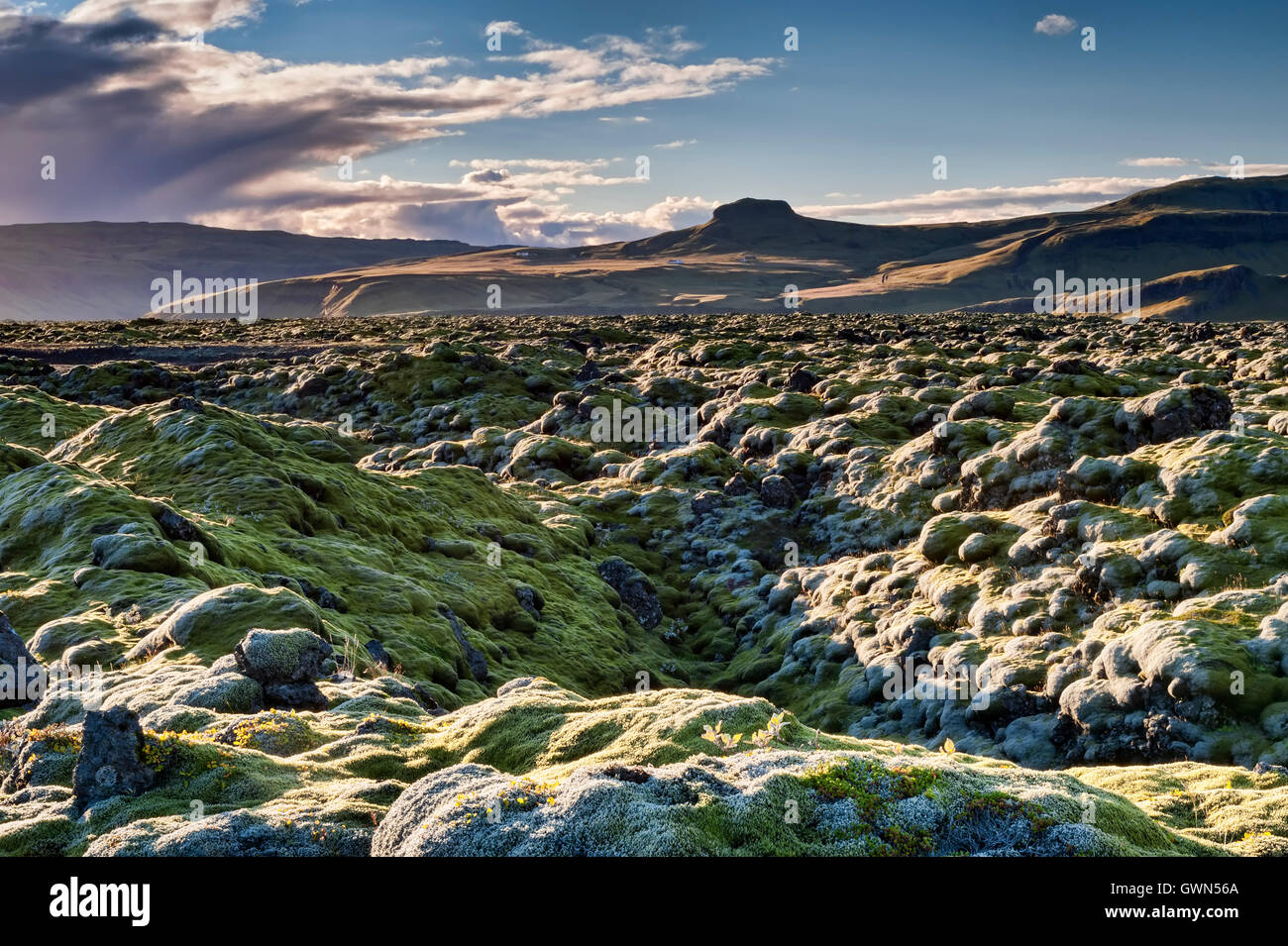 Extensive Moss Covered Volcanic Lava Fields, near Vik i Myrdal, Southern Iceland - Stock Image