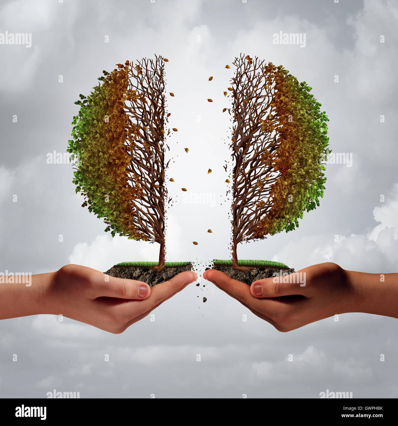 Broken and divided trouble concept as two diverse hands tearing apart a tree resulting in damage and weakness as - Stock Image
