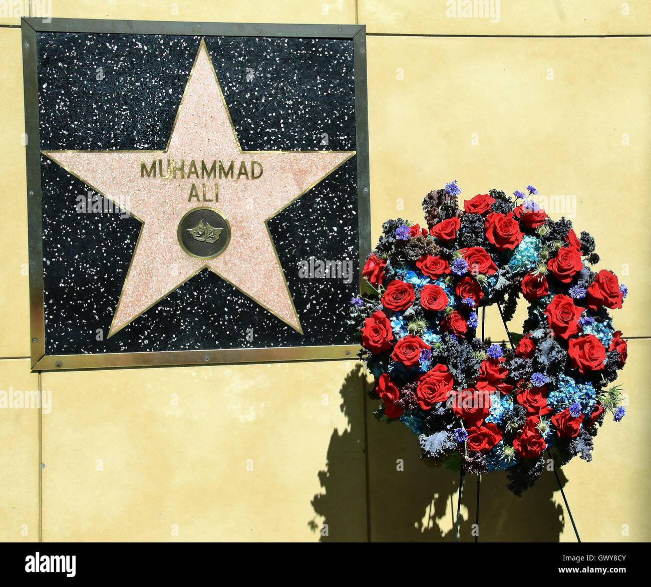 A flower tribute is left next to the Hollywood Walk of Fame star for Muhammad Ali who passed away on Friday night - Stock Image