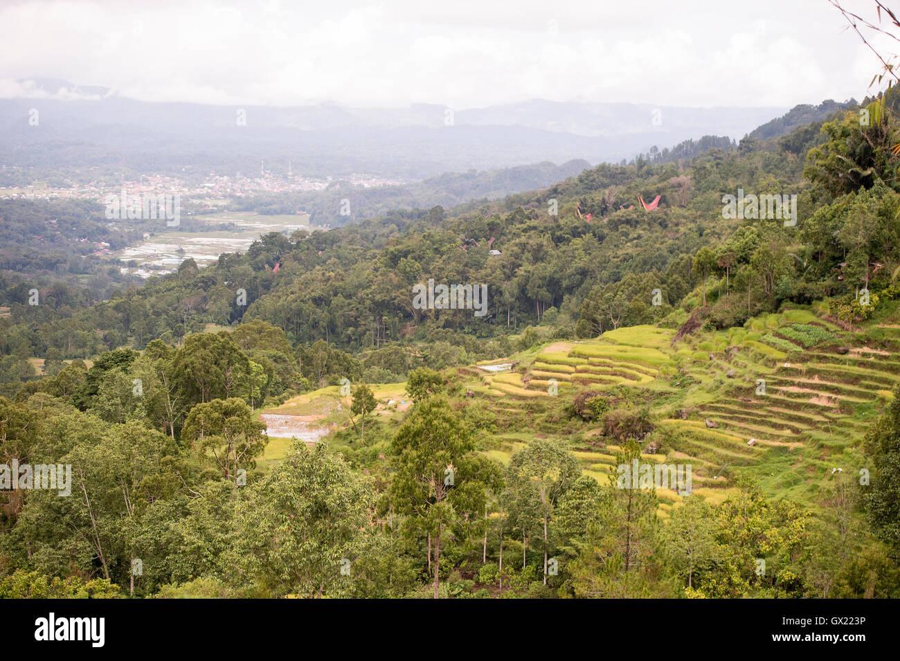 The beautiful green rice field terraces in Batan Pangala, North Toraja, Sulawesi, Indonesia. - Stock Image