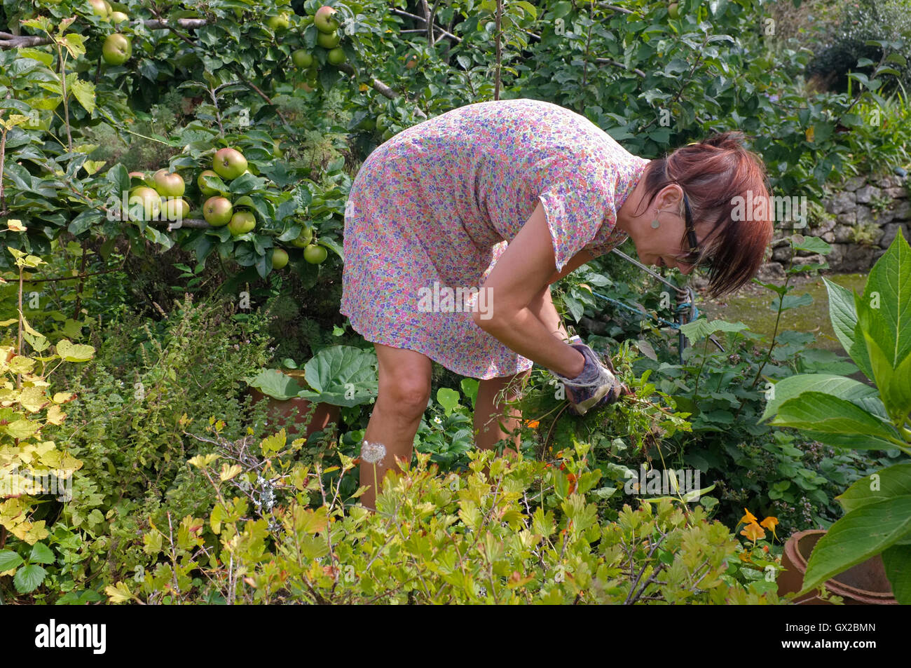 A woman trying to clear an overgrown garden - Stock Image