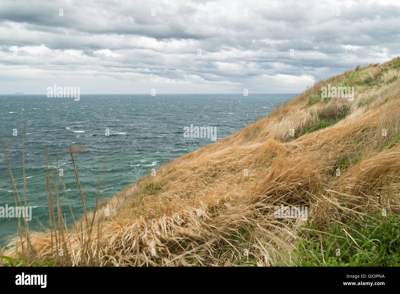 View of a hayfield on a slope and ocean at a windy and cloudy day at the Songaksan Mountain on Jeju Island in South - Stock Image