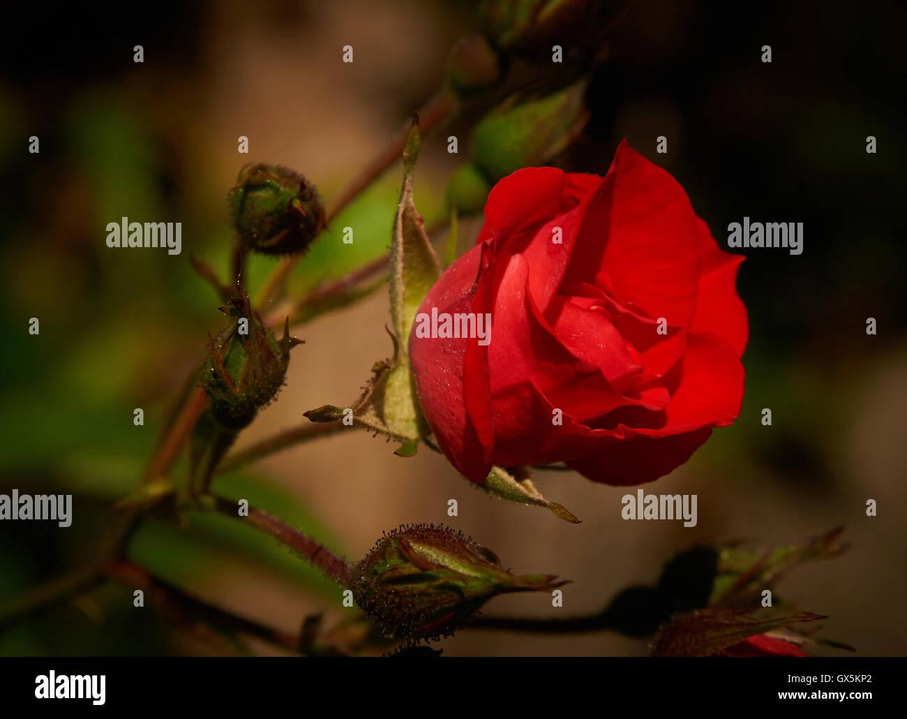 Dramatically Stock Photos & Dramatically Stock Images - Alamy