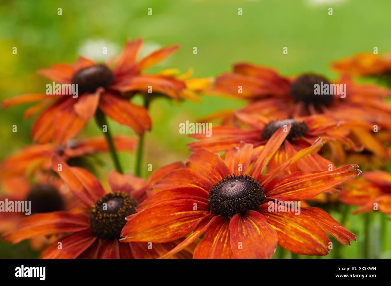 Beautiful Summer Flowers In Full Bloom Stock Photo 119368637 Alamy