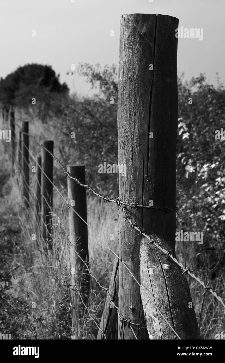 Fence posts used in cattle farming in England - Stock Image