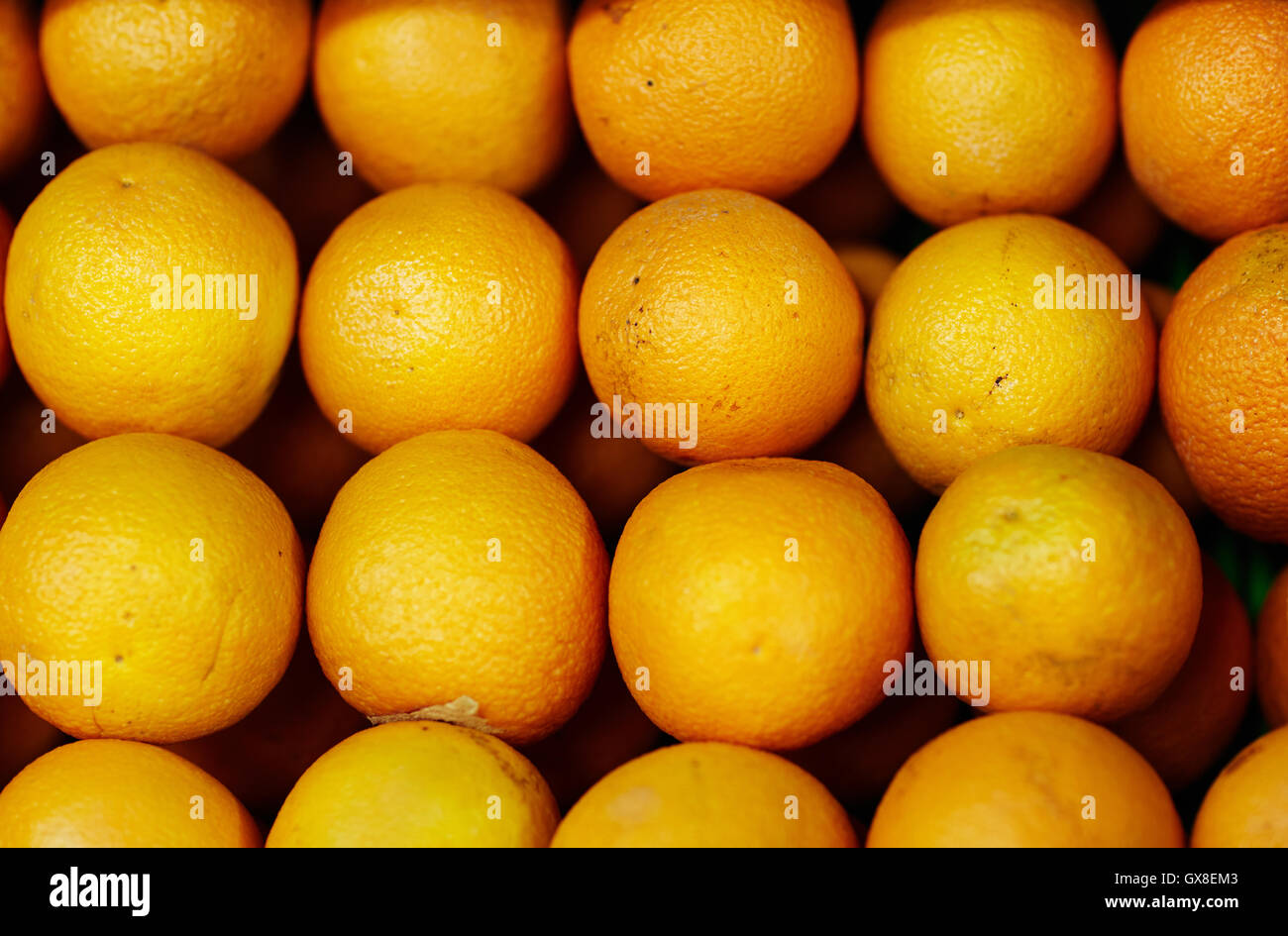 Row of fresh oranges - Stock Image