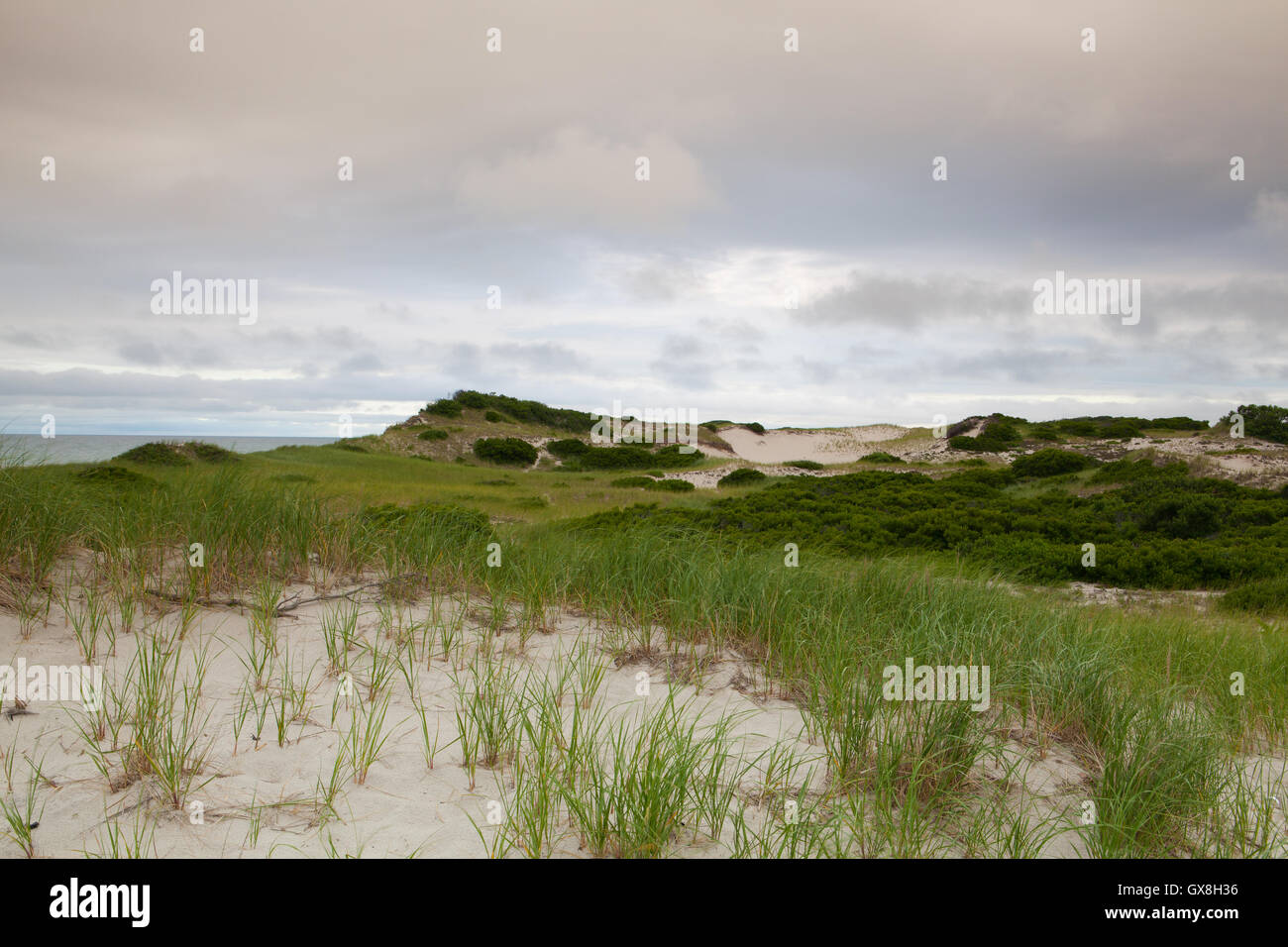 Sunset in the sand dunes beach on the Cape Cod National Seashore on the Atlantic Ocean - Stock Image