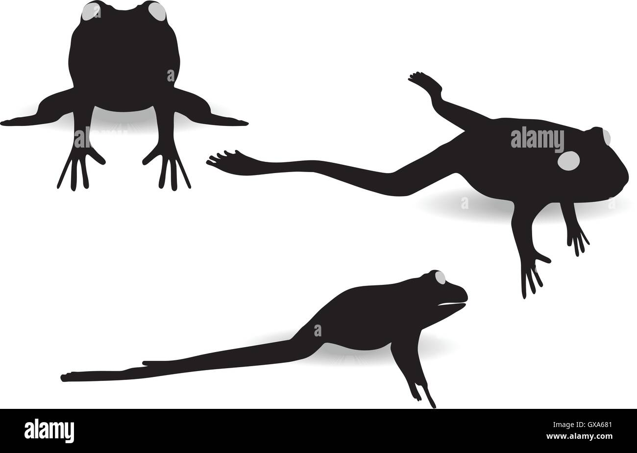 EPS 10 vector illustration of frog on white background - Stock Image