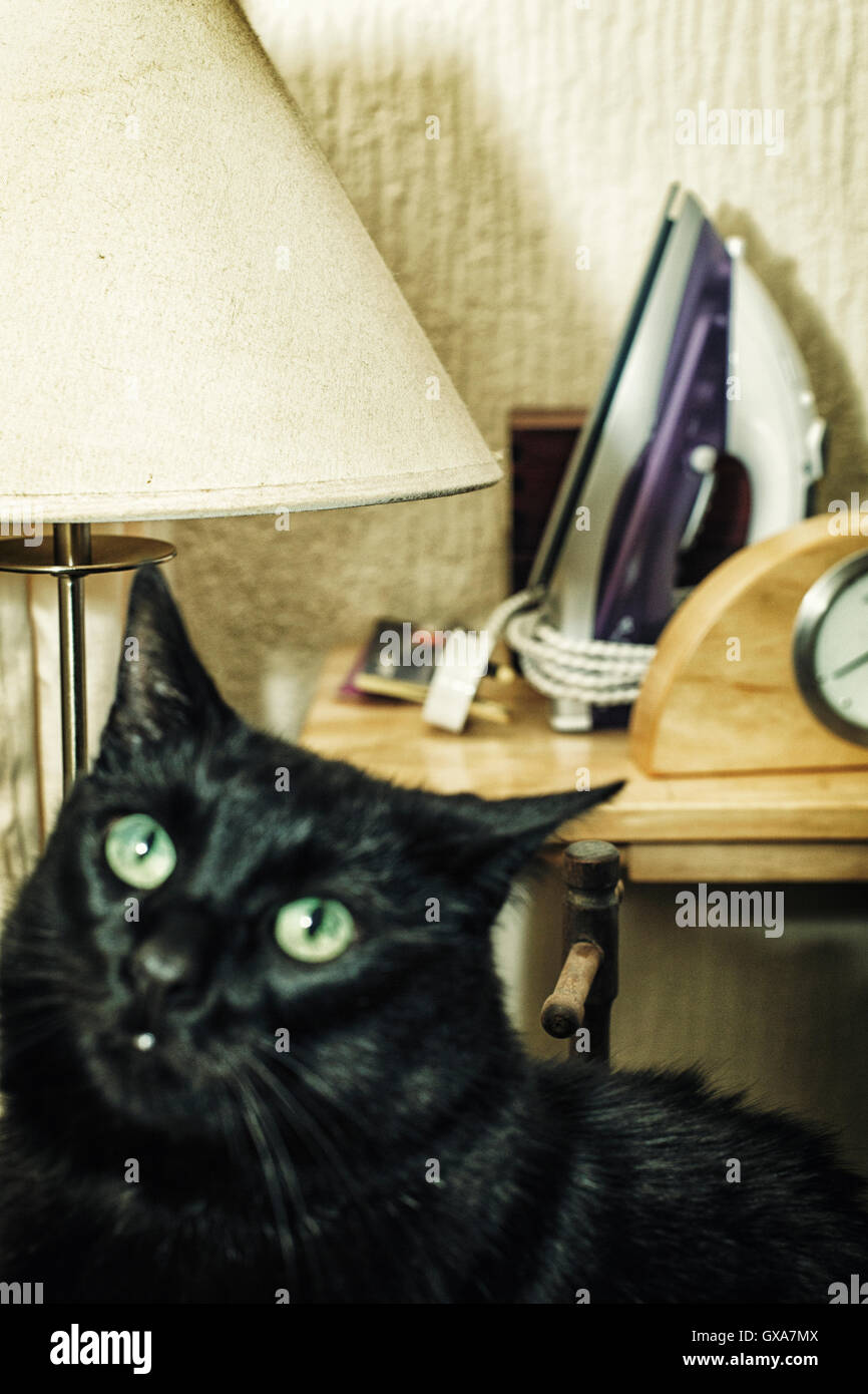 Cat with Clock, Lamp and Iron - Stock Image