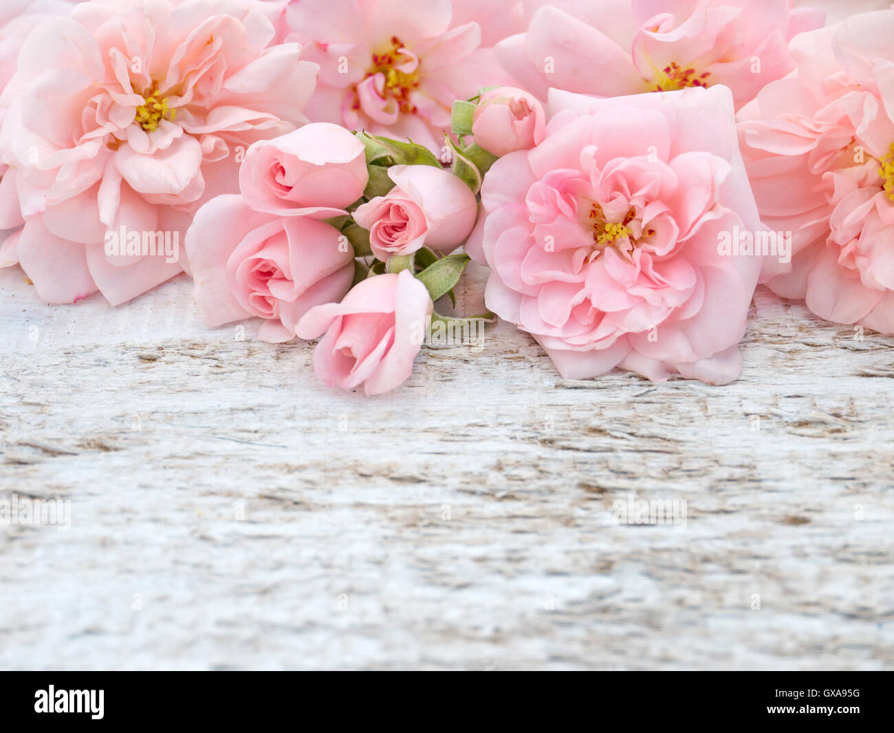 Pale Pink Roses And Buds Bouquet On The Rustic White Painted Stock