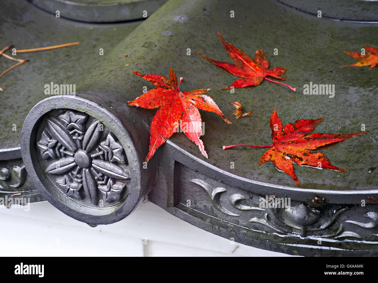Japan, Honshu island, Kansai, Kyoto, red maple leaf. - Stock Image