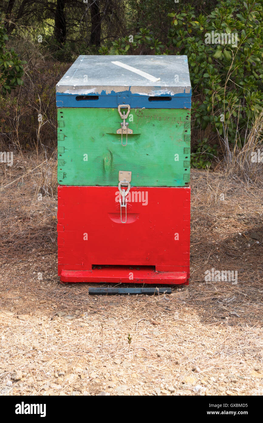 Colorful Honey Beehive in the Meadow Close Up. Red, Green and Blue Painted Wooden Bee Hive Next to a Pine Forest - Stock Image
