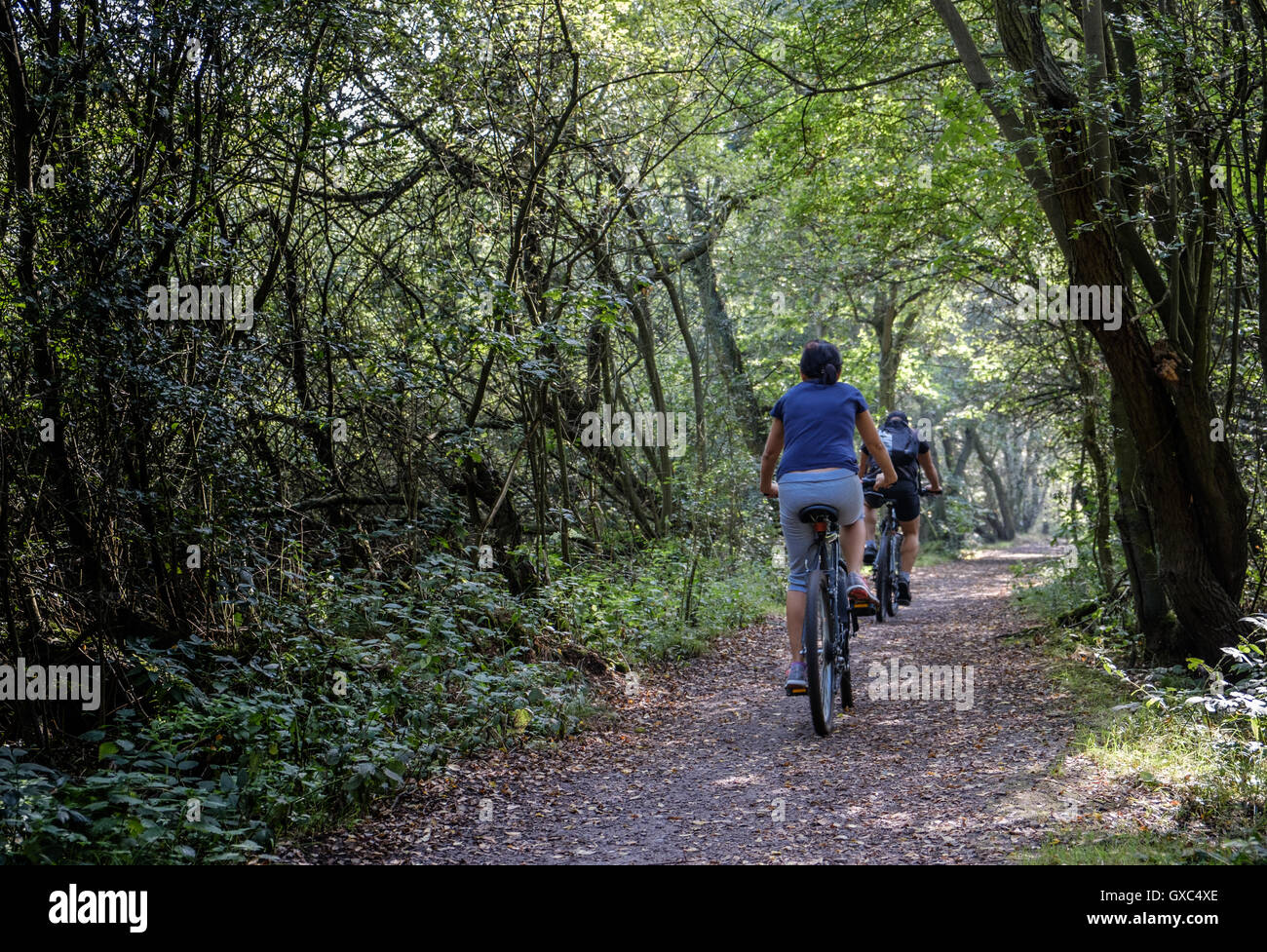 Mountain Bike trails at Pooley Country Park - Stock Image