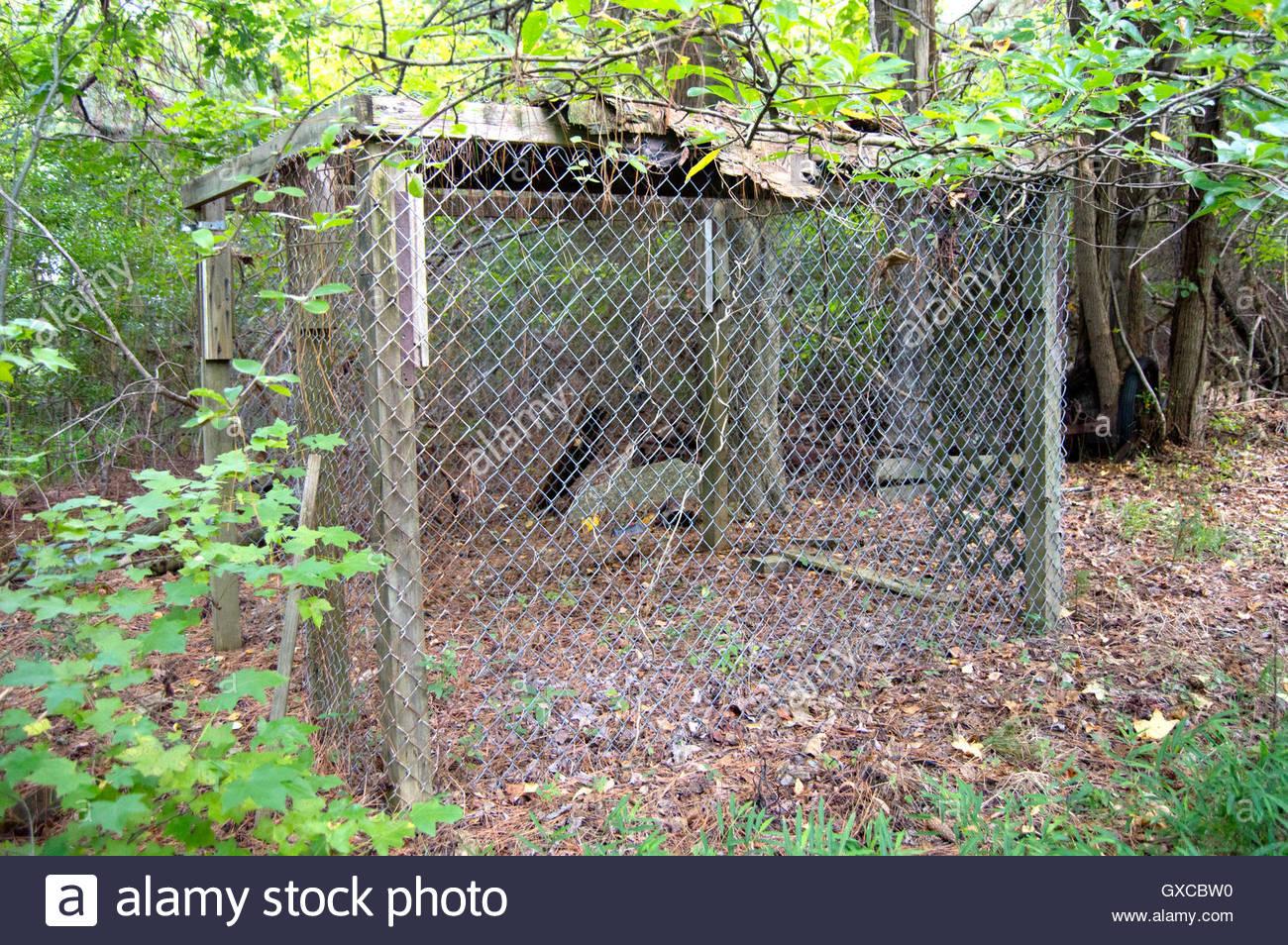Old chicken coop left abandoned in the woods of Hampton, Virginia ...