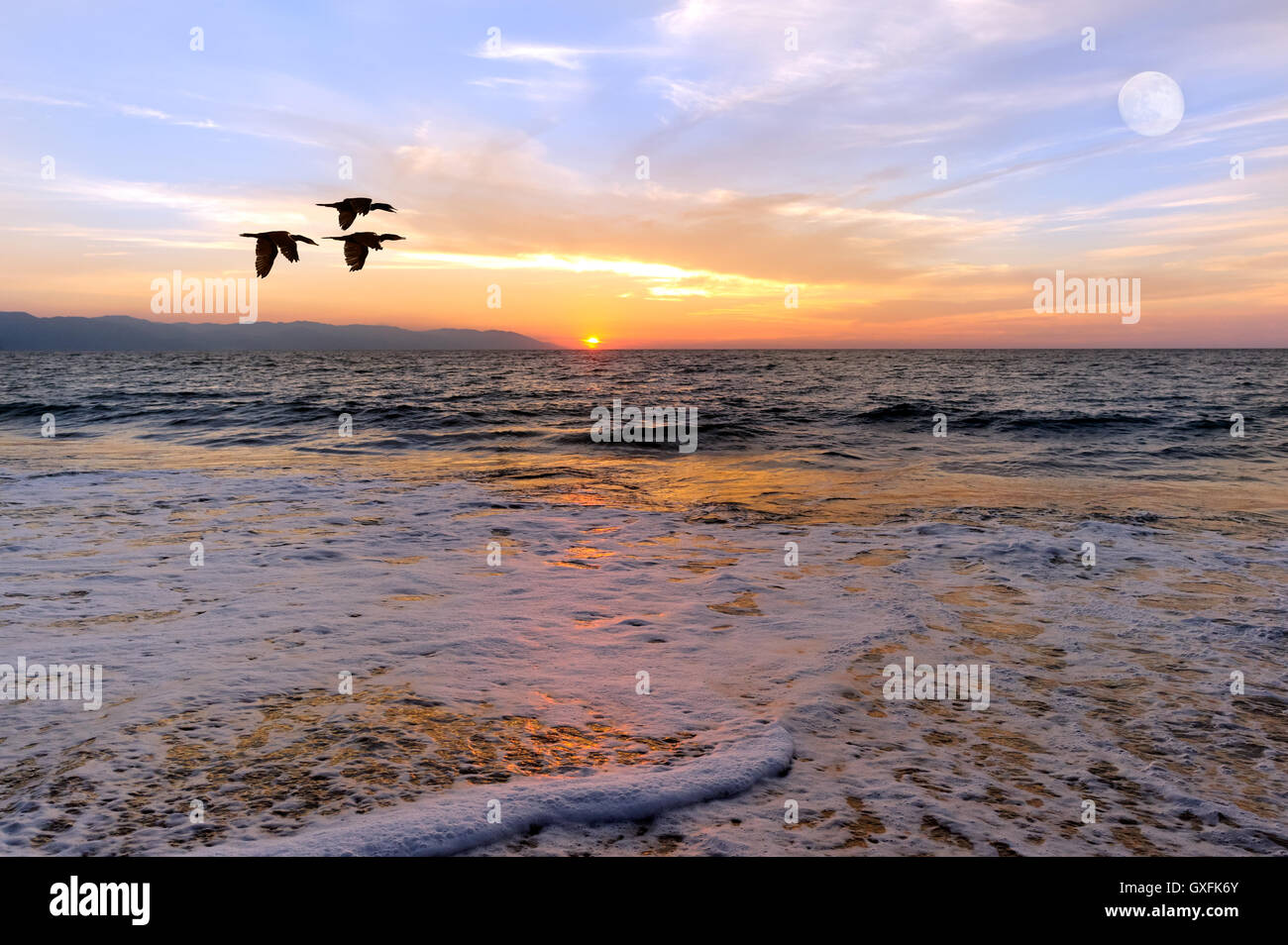 Sunset ocean birds is three silhouetted birds flying over the ocean as the sun sets on the horizon and the full Stock Photo