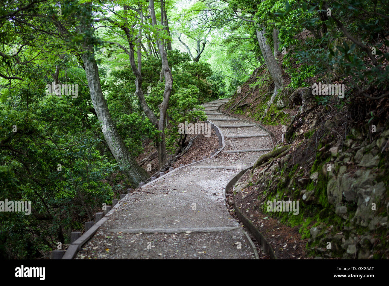 Winding forest path - Stock Image