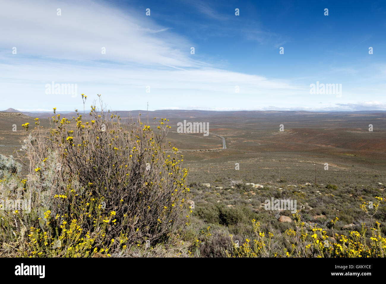 Yellow in a field of nothing - Sutherland is a town with about 2,841 inhabitants in the Northern Cape province of - Stock Image