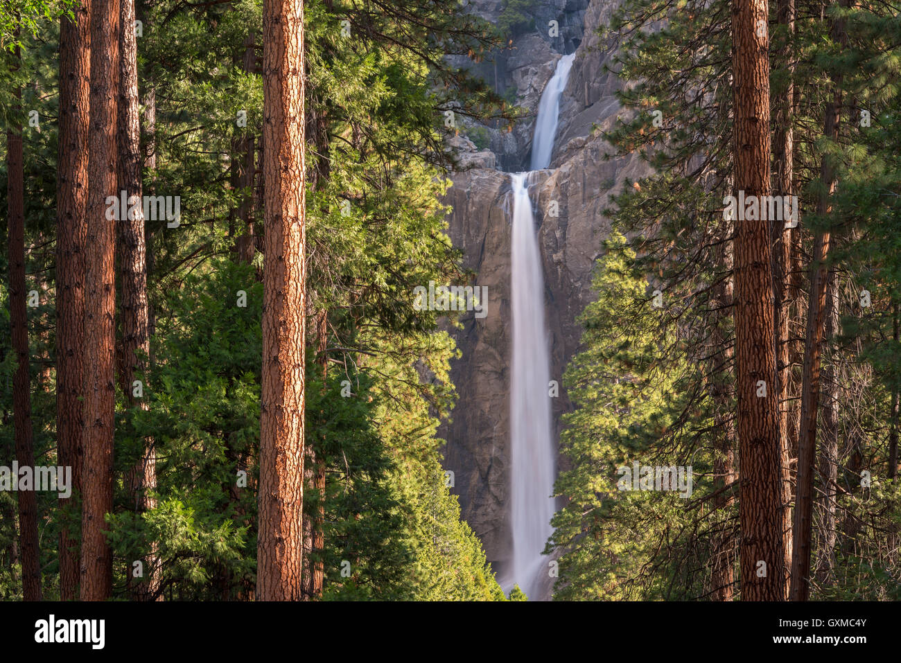 Lower Yosemite Falls through the conifer trees of Yosemite Valley, California, USA. Spring (June) 2015. - Stock Image