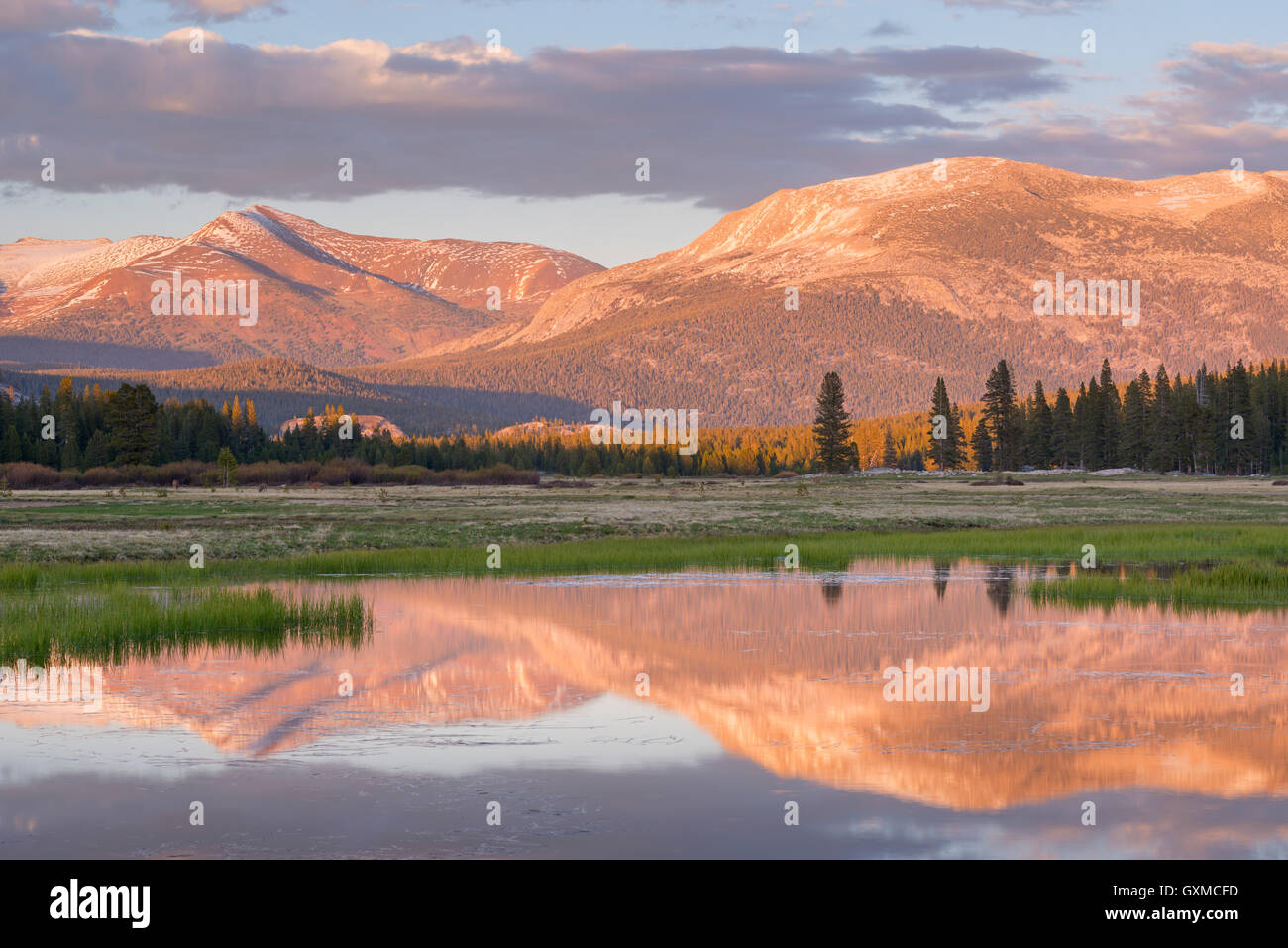 Tuolumne Meadows at sunset, Yosemite National Park, California, USA. Spring (June) 2015. - Stock Image