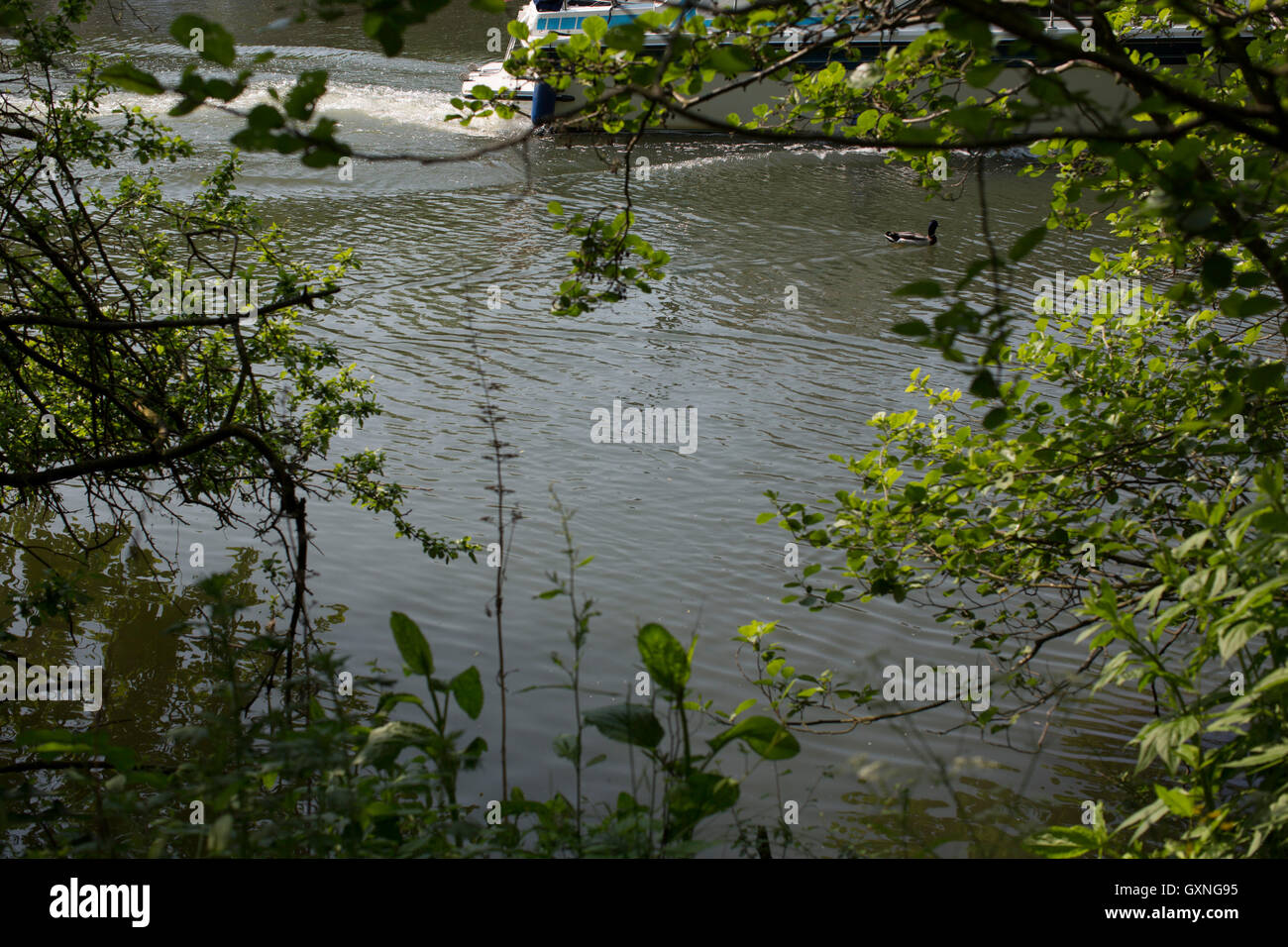A small motor boat sailign on the river thames at Abingdon in OXfordshire, UK. - Stock Image