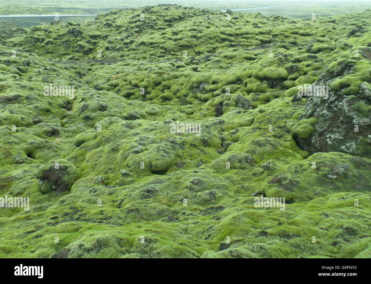 Stunning View of Moss Covered Lava Field along the road of Iceland, Background - Stock Image