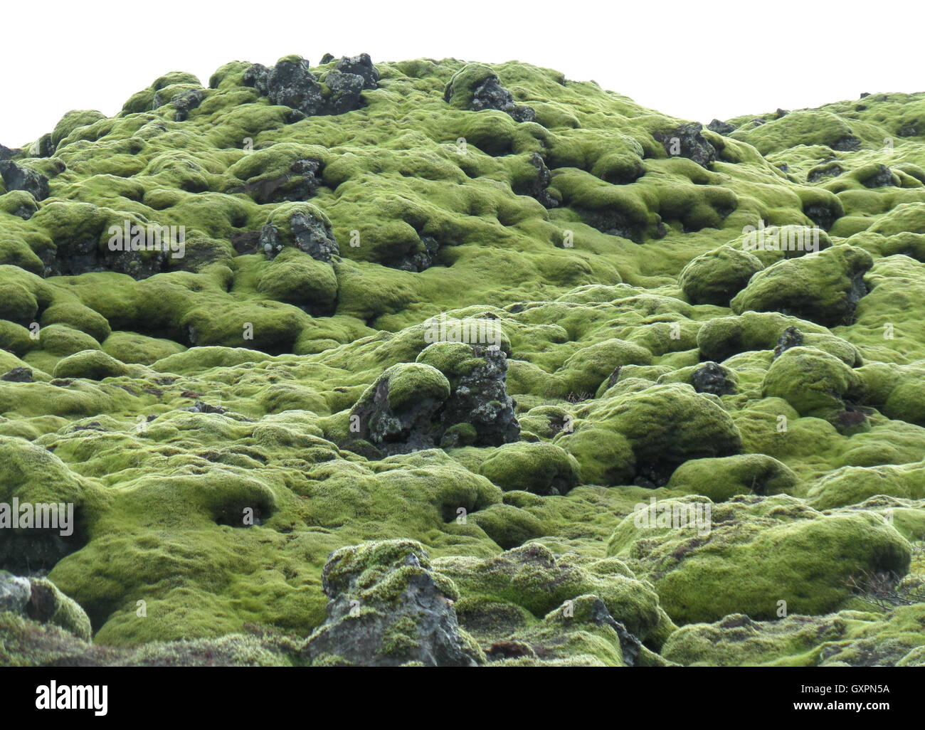 Amazing Green Mossy Lava Field in South Iceland, Background - Stock Image