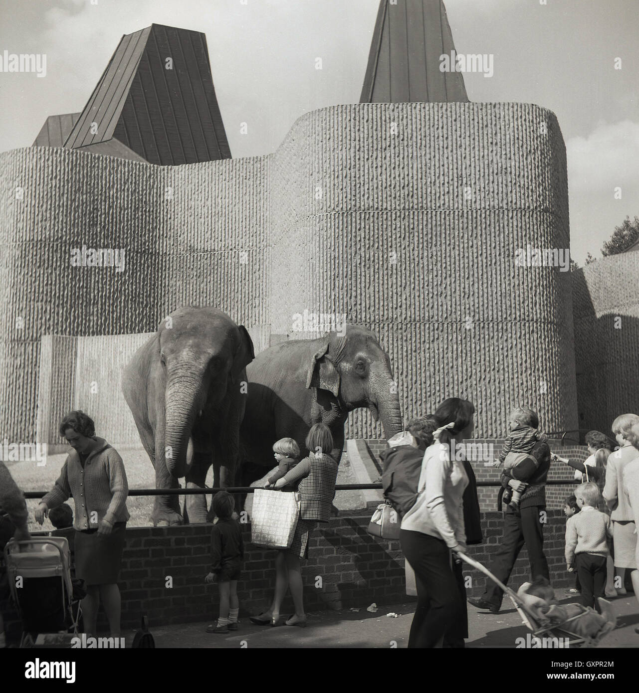 1960s, historical, Getting close to the elephants at London Zoo, Regents Park, London, England. Stock Photo