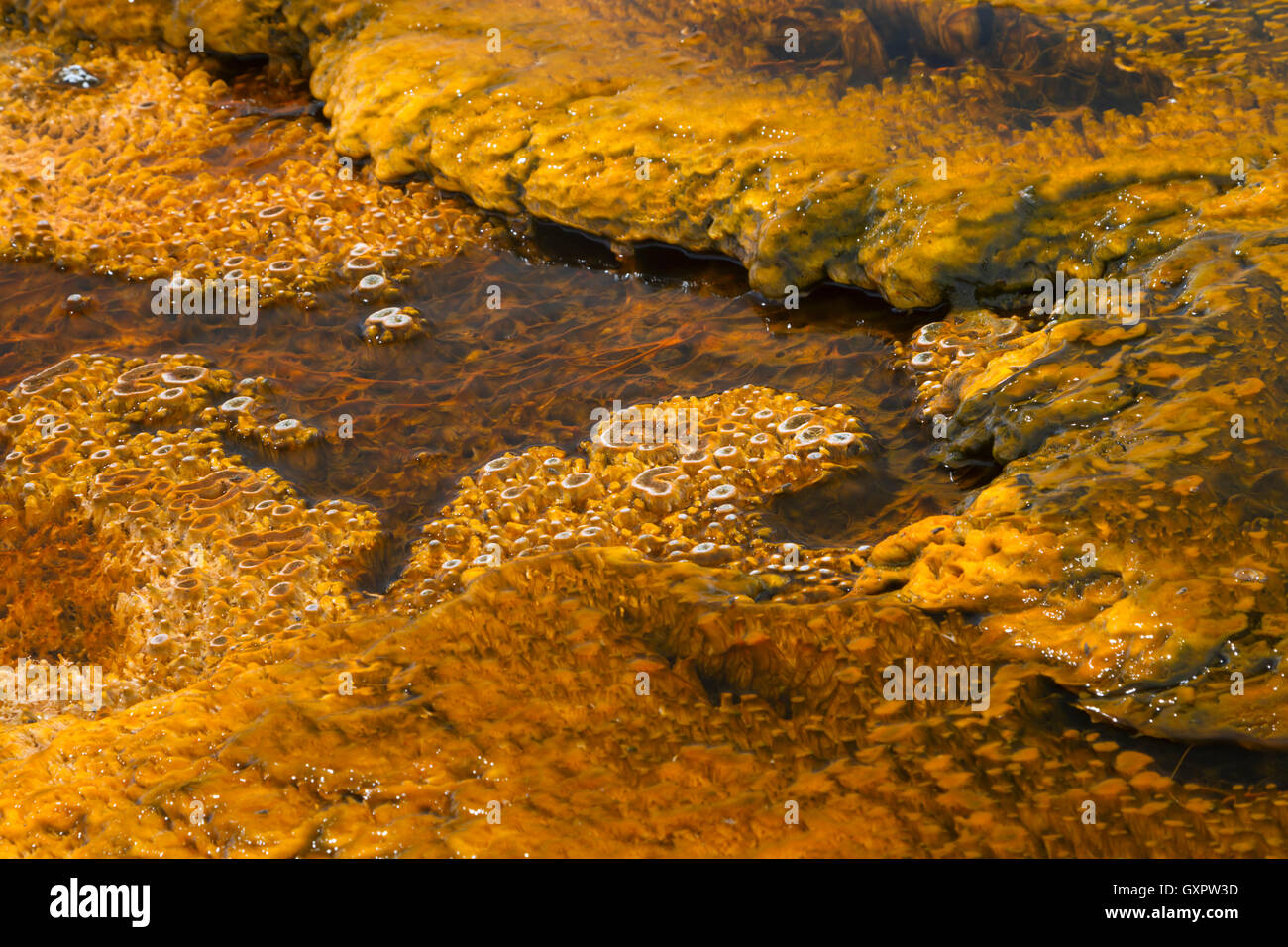 Bacterial growth in the warm stream of a thermal spring, West Thumb Geyser Basin, Yellowstone National Park, Wyoming, - Stock Image