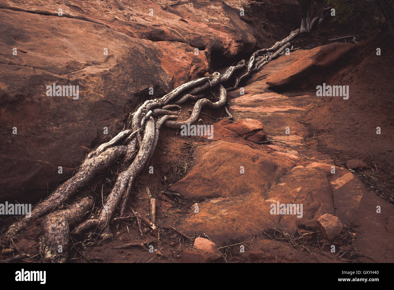 Twisting Roots - Stock Image