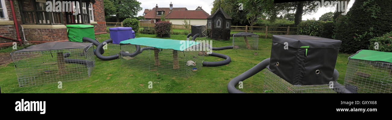 Rabbit run maze in tunnels & tubes at Dunham Massey Ice Cream Farm, Dunham, Altrincham, Cheshire, WA14 5SG - Stock Image