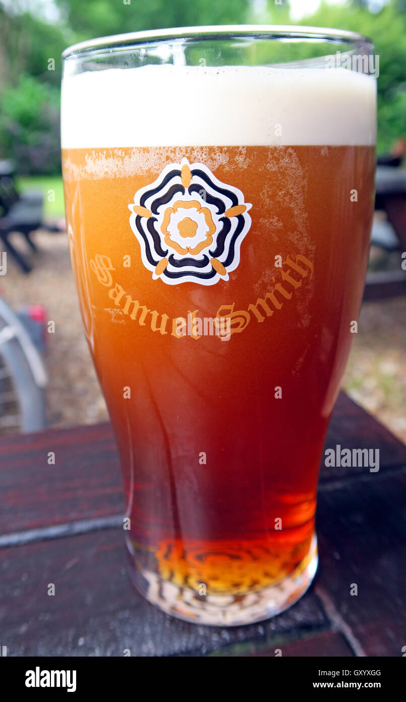 A full pint of Sam Smiths Old Brewery Bitter, Yorkshire, in a beer garden - Stock Image