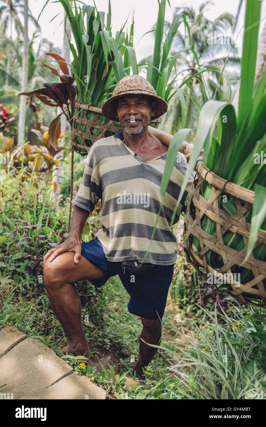 Full length shot of happy old man carrying seedlings on his shoulders. Senior farmer standing in his farm. - Stock Image