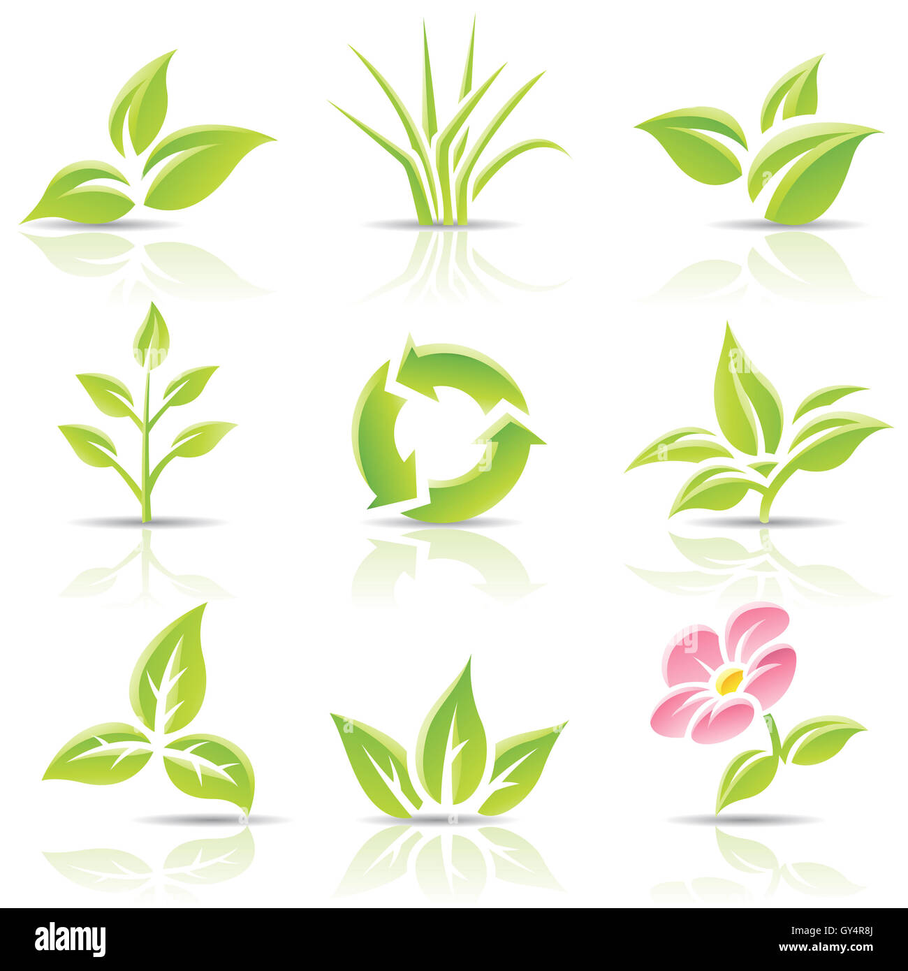 Vector icons of leaves and a flower - Stock Image