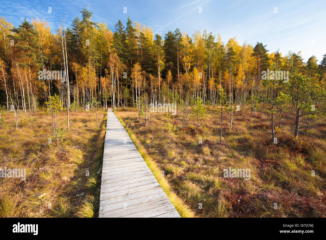 Wooden Path Way Pathway From Marsh Swamp To Forest. Autumn Nature Forest Landscape. Wooden Board Boarding On Ground Stock Photo