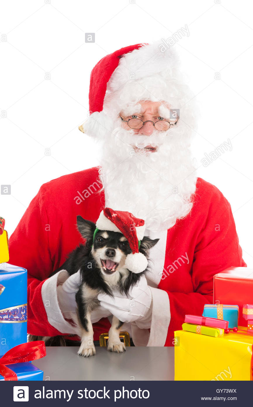 Giving Gifts To Your Dog Stock Photos & Giving Gifts To Your Dog ...