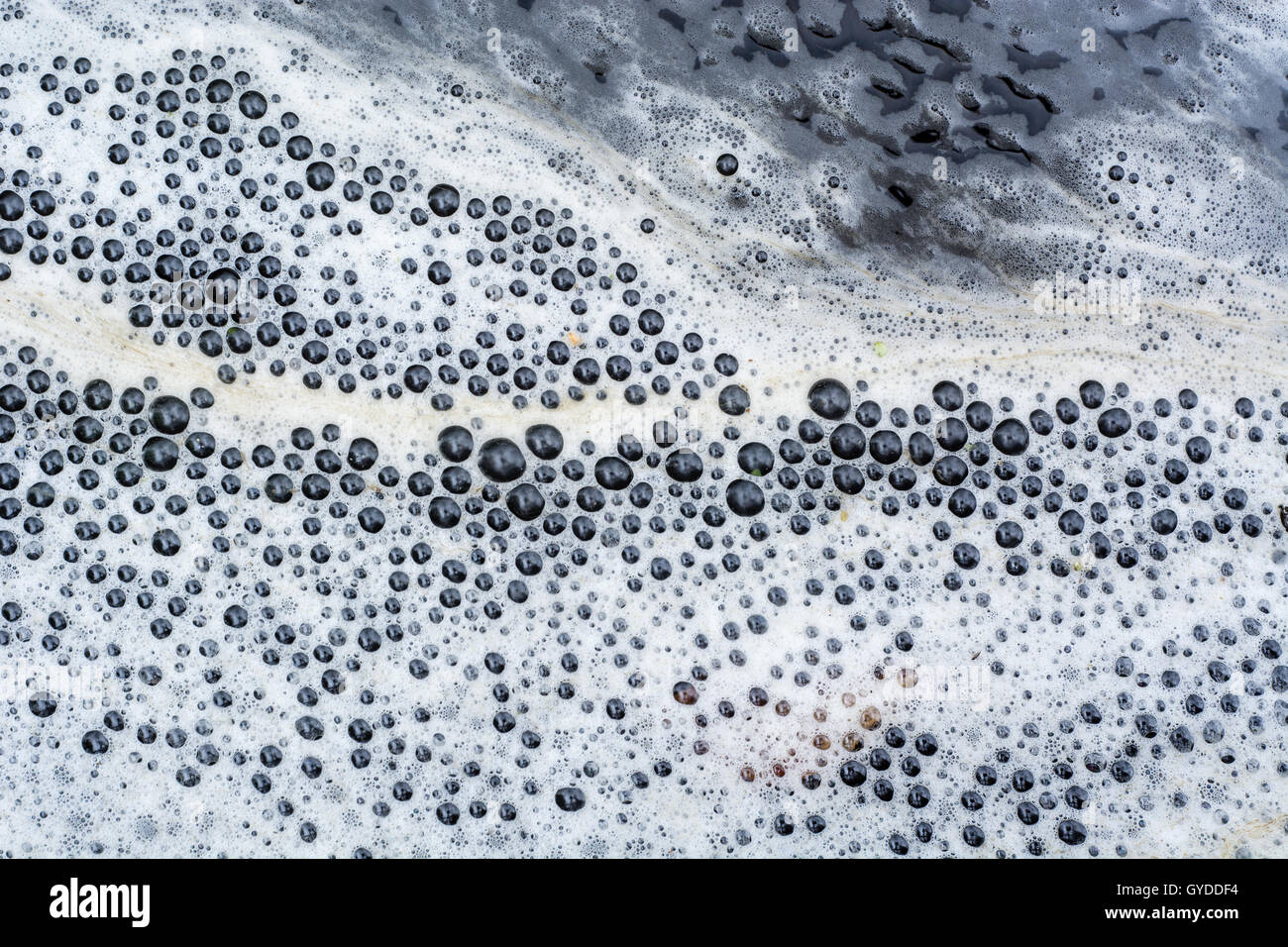 Organic scum forming foam line on surface of river. White and brown foam on water near shore with low flow rate - Stock Image