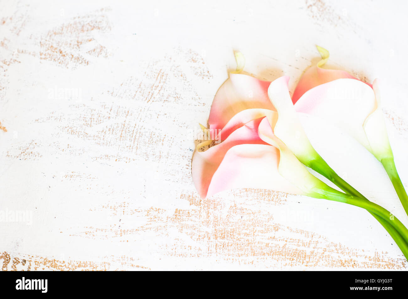Calla Lily Flowers On Rustic Wooden Background With Copyspace