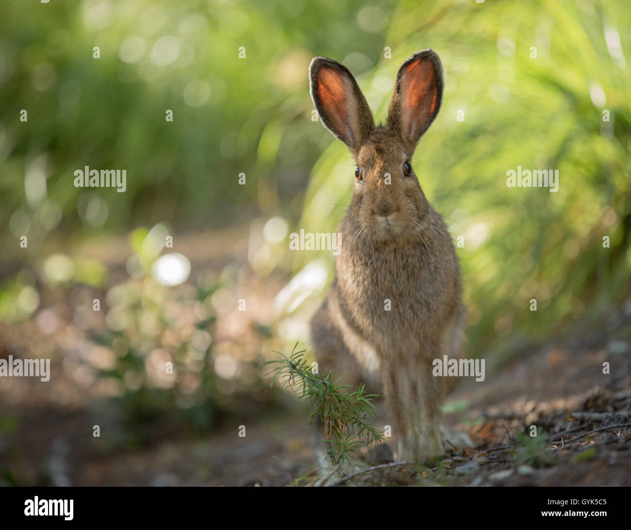Bunny pausing for a photo - Stock Image