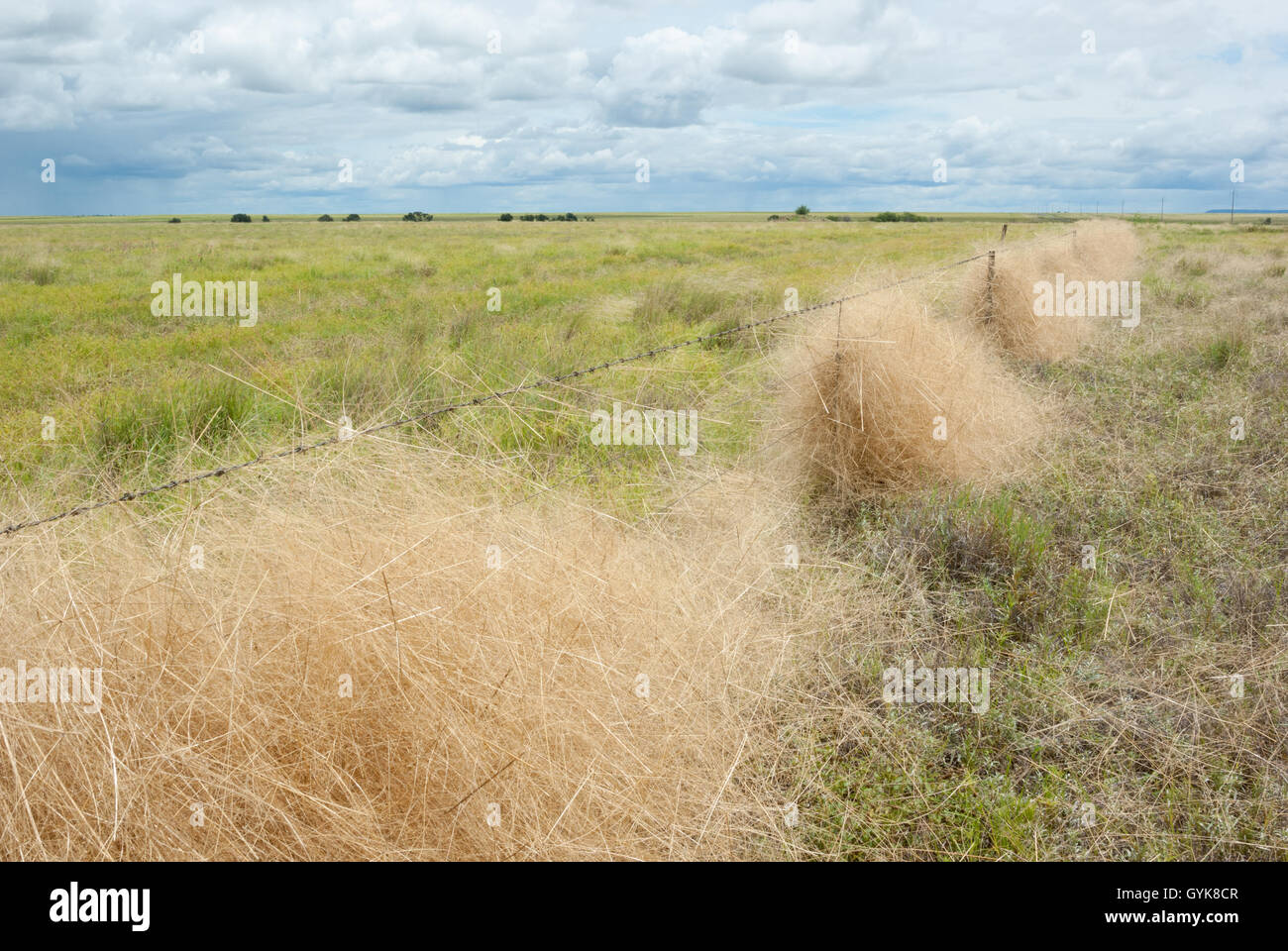 Green field with grass caught in barbed wire fence in outback - Stock Image