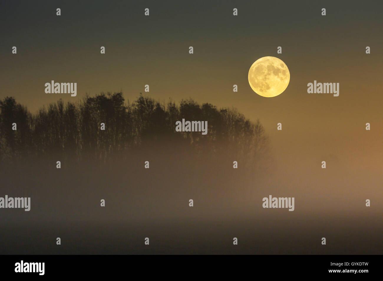 Vollmond ueber im Moor aufsteigendem Bodennebel, Deutschland, Bayern, Grabenstaetter Moor | full moon over ascending Stock Photo